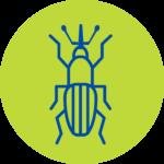 Plagas Plaga Servicio Gorgojo Fumigación